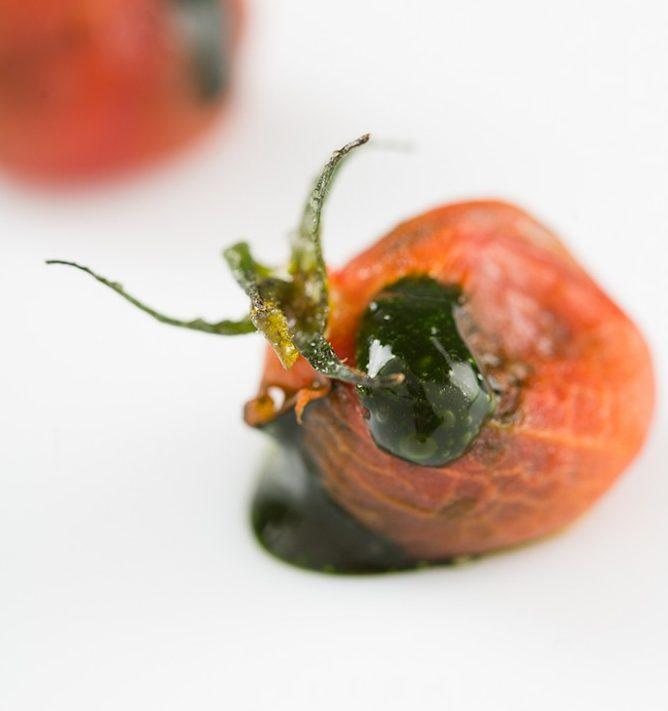 recetas con plancton