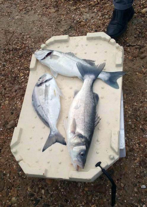 Experiencia de acuicultura en Veta la Palma